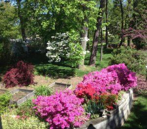 stoneham backyard